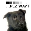 Portrait de little black dog